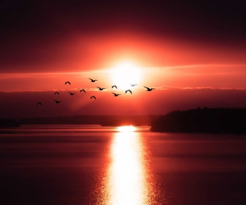 birds-calm-waters-clouds-2129825