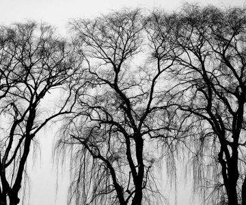 black-and-white-branches-three-249