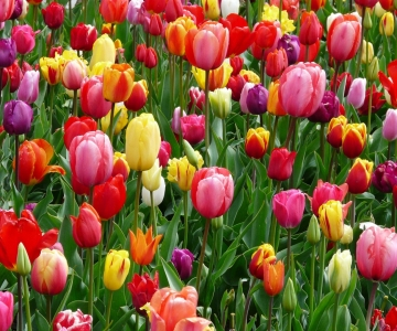 bloom-blossom-colorful-69776